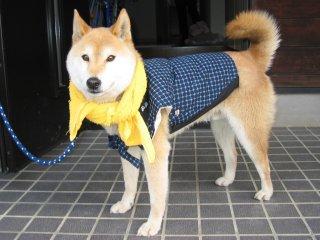 我が家の番犬 (いぬ )
