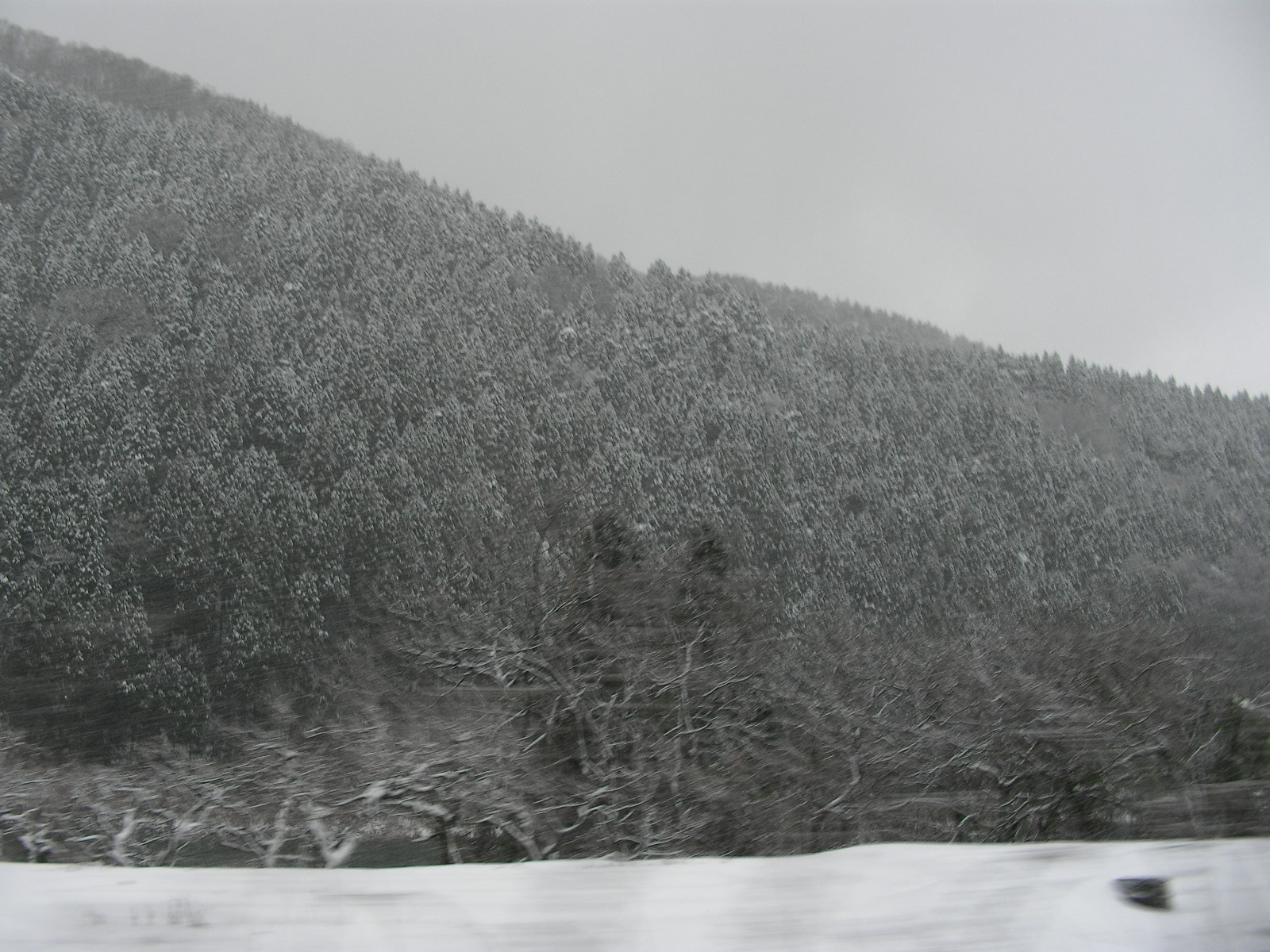 2008年、しらやまさん初詣 (雑記 )