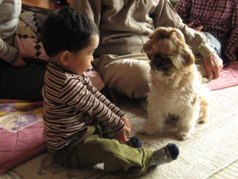 犬好きな息子 (いぬ )