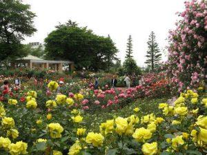 色鮮やかなバラ園にて