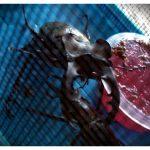 Photo_Effects.jpeg