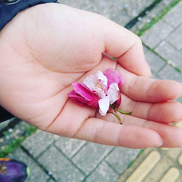 早咲きの桜が満開!