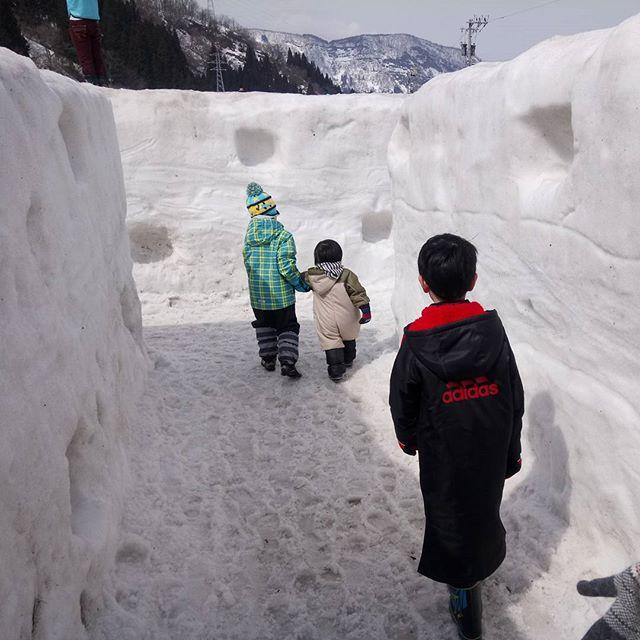白山スノーフェスティバルに来ました。雪の迷路で遭難中…。