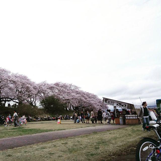 足羽川で花見&サイクリング。そして、おなかが減ったら屋台巡り。