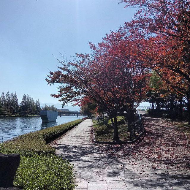 環水公園から運河沿いをサイクリング中。紅葉がきれいだわ(^ ^)