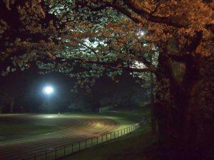 春の嵐の前に夜桜堪能
