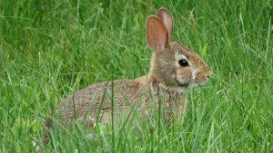 児童書「学校ウサギをつかまえろ」を読んで